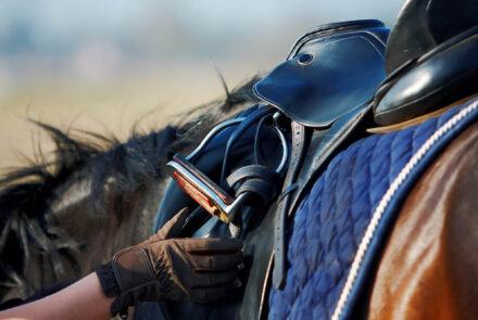 equestrian-14.1